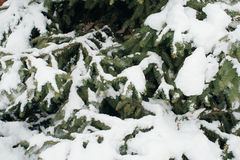 L'arbre de Noël, pin couvert de neige, nouvelle année, hiver est temps Images libres de droits