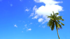 L'arbre de nuage et de noix de coco de ciel bleu de fond ont l'espace libre Image libre de droits