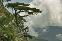 L'arbre de roche Images libres de droits