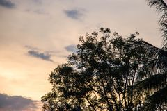 L'arbre de silhouette s'est embranché photographie stock