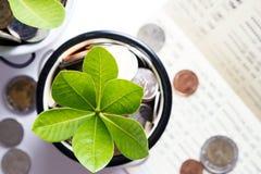 L'arbre des pièces de monnaie a représenté l'argent d'économie et l'élevage des affaires Photographie stock libre de droits
