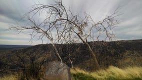 L'arbre donnent sur Image libre de droits