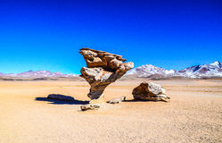 L'arbre en pierre, réservation d'Eduardo Avaroa Andean Fauna National, Bolivie Images stock