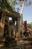 L'arbre enracine l'élevage par les ruines du temple de Prohm de ventres chez Angko Images stock