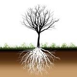 L'arbre enracine la silhouette illustration libre de droits