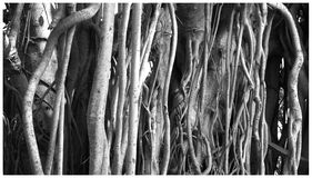 L'arbre enracine le fond Photos libres de droits
