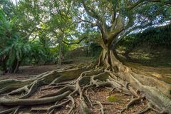 L'arbre enracine le résumé photographie stock