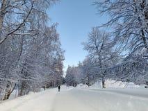 L'arbre a entouré le snowscape vide de rue sous le bluesky avec la beauté panoromic scénique photos stock