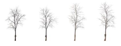 L'arbre est embranché sans feuilles photo libre de droits