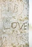 L'arbre est gravé l'amour de mot Image stock
