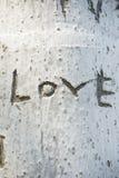L'arbre est gravé l'amour de mot Image libre de droits