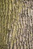 L'arbre est légèrement vert photos libres de droits