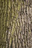 L'arbre est légèrement vert image stock