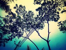 L'arbre est notre ami d'environnement Photos libres de droits