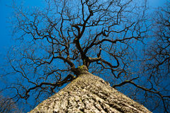 L'arbre est près du ciel Photo libre de droits