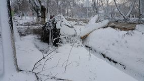 L'arbre est tombé après un ouragan un ouragan balayé par la ville l'arbre vomi avec des racines désastre Images libres de droits