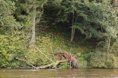 L'arbre est tombé dans la rivière photos stock