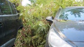 L'arbre est tombé sur la voiture désastre Vent violent banque de vidéos