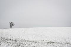 L'arbre et la neige ont couvert le champ de ferme, près du verger de ressort, Pennsylvani Photos stock