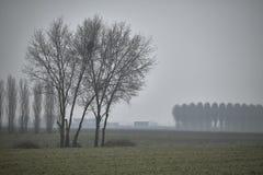 L'arbre et le brouillard Images stock