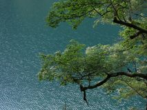 L'arbre et le lac photographie stock libre de droits
