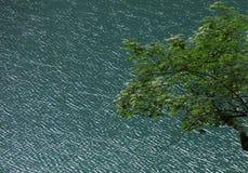L'arbre et le lac Images libres de droits