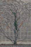 L'arbre et le mur de briques gris Photos stock