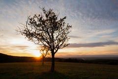L'arbre et le siège ont placé dans la forêt d'automne en Allemagne du sud photos libres de droits