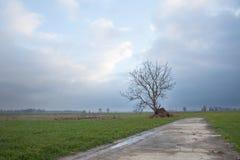 L'arbre et les prés dans le proche néerlandais houten Image libre de droits