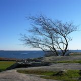 L'arbre a formé par le vent. Images stock