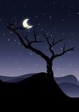 L'arbre isolé Images libres de droits