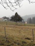 L'arbre isolé Photographie stock libre de droits