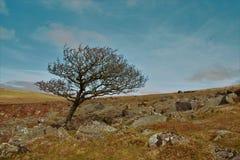 L'arbre isolé Photographie stock