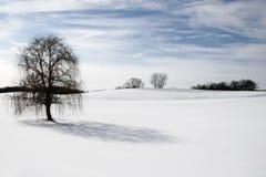 L'arbre isolé dans la neige a couvert la côte Photos libres de droits