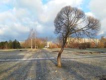 L'arbre isolé dans la place Images libres de droits