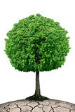 L'arbre isolé sur la planète a fendu d'isolement sur un fond blanc Photos libres de droits