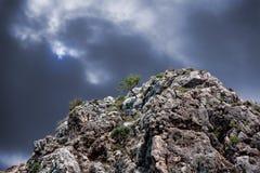 L'arbre isolé sur une roche Photo libre de droits