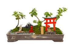 L'arbre japonais de bonsaïs sur le fond blanc d'isolement Photographie stock
