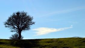 L'arbre, le corbeau et le nuage Photos stock
