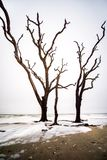L'arbre mégalithique se noie en mer photo libre de droits
