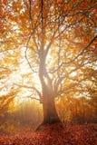 L'arbre magique Photographie stock libre de droits
