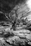 Vieil arbre mort dans le désert Photo stock