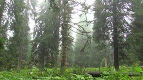 L'arbre mort sont provoqués par les pluies acides, les oxydes de soufre, l'azote et l'ozone, émissions banque de vidéos