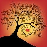 L'arbre noir de silhouette avec une feuille Photos libres de droits