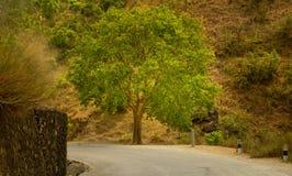 L'arbre par la route Image stock