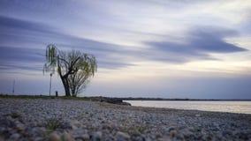 L'arbre par le lac Image libre de droits