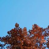 L'arbre part dans le parc image libre de droits