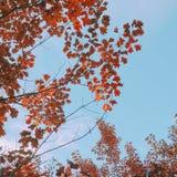 L'arbre part dans le parc images stock