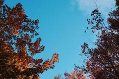L'arbre part dans le parc images libres de droits