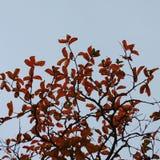 L'arbre part dans le parc photographie stock libre de droits